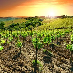 tuscan-guided-tours_chianti-02